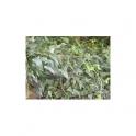Stechwinden (Smilax officinalis - Salsaparilha) gemahlen  250g