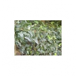 Sarsaparilla (Smilax officinalis) 250g ground