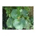 Piper umbellatum (Pariparoba) 250g