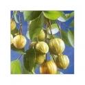 Garcinia Cambogia dry fruits 250g