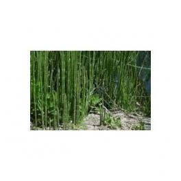 Horsetail (Equisetum arvense - Cavalinha) 250g