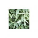 Vernonia Polysphaera (Assa Peixe) 250g