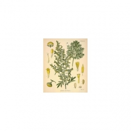 Absinthium mother tincture (Artemisia absinthium)125ml