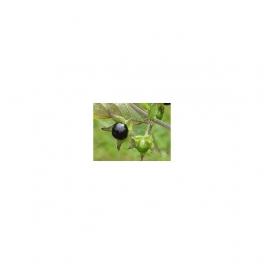 Belladonna , Atropa belladonna, Mother tincture 125ml