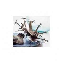 Harpagophytum procumbens (Devil´s claw) Mother tincture 125ml