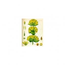 Gentiana lutea (Bitterwort) Mother tincture 125ml