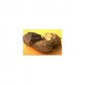 Luffa operculata (Buchinha da Norte)  Mother tincture 125ml