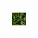 Nectandra amara Mother tincure 125ml