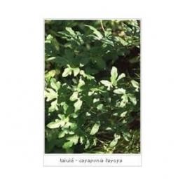 Cayaponia tayuya (Tayuya - Taiuia) 250g