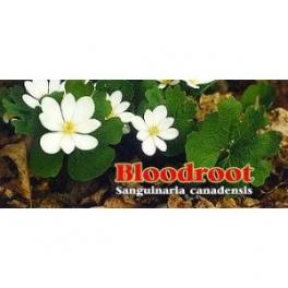 Bloodroot (Sanguinaria Canadensis) 120 Capsules 300mg
