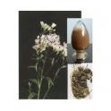 Snakeroot (Rauwolfia serpentina) POWDER 250g
