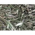 Olivenblaetter (Olea europaea)  120 Kapseln 300mg