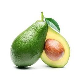 Abacateiro (Avocado) 1 liter