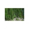 Horsetail - Cavalinha - (Equisetum arvense)  30g