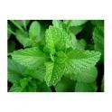Peppermint - Hortela - (Mentha) 30g