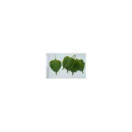 Perilla seed (Lavandullin) 60 Pills