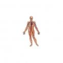 Blutzirkulation und Haemorrhoidenmischung